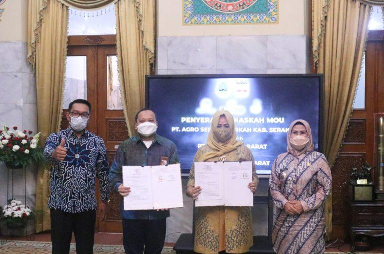 Jalin Kerja Sama dengan Banten, Agro Jabar Siapkan 1000 Ton Bibit Jagung